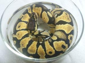 Pastel_cake