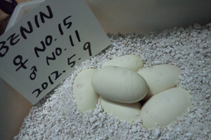 Egg_no11_20125911