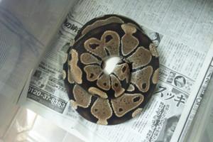 Egg_no11_2012593