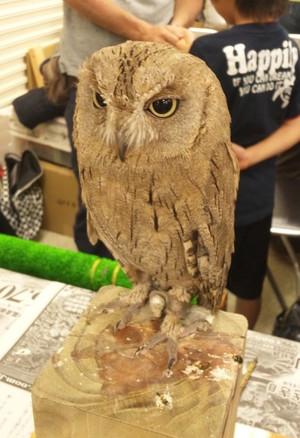 Owl1_2