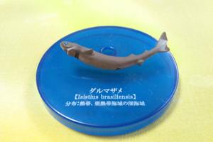 Shark12_2