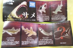 Shark16
