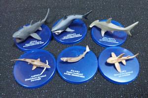 Shark6_2