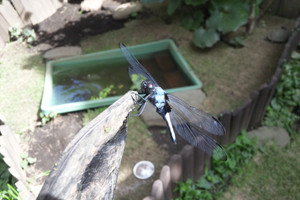 July159_dragonfly