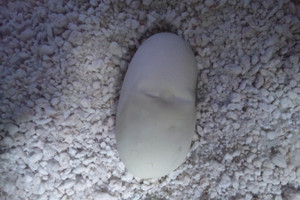 Choco_egg_nov041