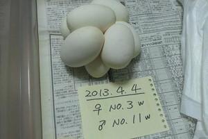 No3_2013apr041