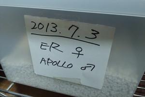 2013jul0322_er