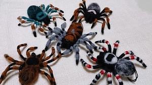 Spider_2013aug142