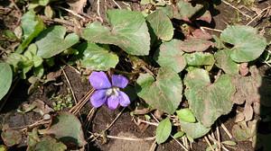 2014apr102_violet