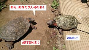 2014apr1542_zeus_artemis