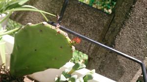 2014may171_cactus