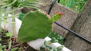 2014may286_cactus