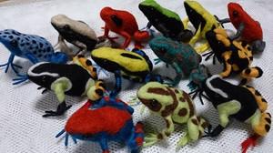 Frog_2014jun271