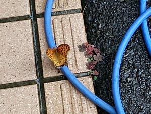 Butterfly_2014jun2617