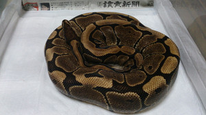 Woma_2014oct134
