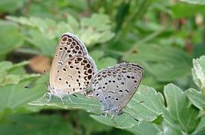 2015jul192_butterfly