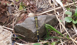 2015aug244_dragonfly