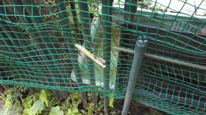 2015aug281_praying_mantis