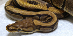 Woma_2015aug293